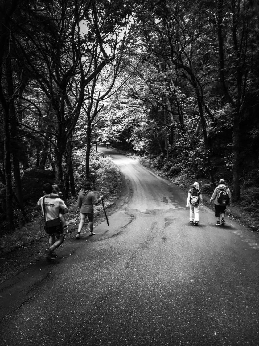 walking a road down Mount Erie, Washington