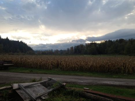 On the Farm 1