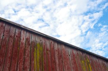 On the Farm 5